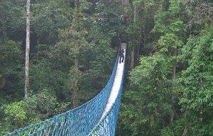 jembatan kanofi